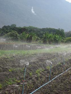 Organic Farm 1
